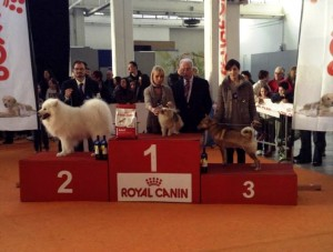 Podio-gara-Royal-Canin-Allevamento-Shibainu-kuma